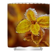 A Frosted Plant Shower Curtain