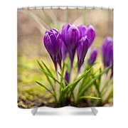 A Gathering Shower Curtain