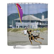 A German Shepherd Leaps For A Kite Shower Curtain