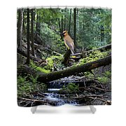A Giant Cedar Waxwing On Mt Spokane Shower Curtain