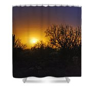 A Golden Saguaro Sunrise Shower Curtain