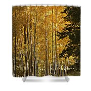 A Golden Trail Shower Curtain