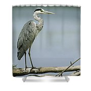 A Graceful Gray Heron Standing On A Log Shower Curtain