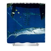 A Great Barracuda Beneath A Boat, Kimbe Shower Curtain