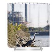 A Great Blue Heron Ardea Herodias Shower Curtain