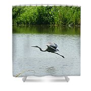 A Great Blue Heron Landing Shower Curtain