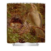 A Greenfinch At Its Nest Shower Curtain