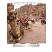 A Group Of Camels Sit Patiently Shower Curtain