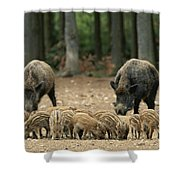 A Group Of Young Wild Boars Nose Shower Curtain