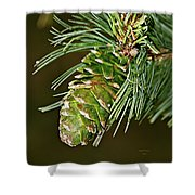 A Growing Pine Cone Shower Curtain