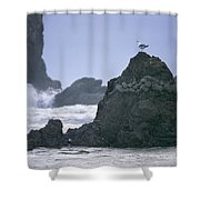 A Gull Sits On A Rock At Cannon Beach Shower Curtain