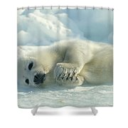 A Harp Seal Pup Lies On Its Side Shower Curtain