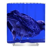 A Hawk Looks Back  Shower Curtain