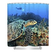 A Hawksbill Turtle Swims Shower Curtain