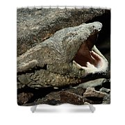 A Hellbender Salamander In Its Rocky Shower Curtain
