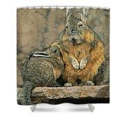 A Herbivorous Viscacha Nurses Her Baby Shower Curtain