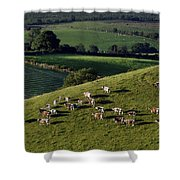 A Herd Of Cattle Graze On Rolling Green Shower Curtain