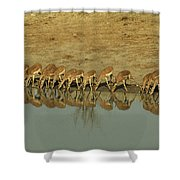 A Herd Of Impala Drinking At A Watering Shower Curtain
