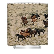 A Herd Of Wild Horses Gallops Shower Curtain