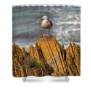 A Herring Gull, Colonsay, Scotland Shower Curtain