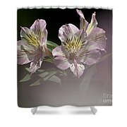 A Hint Of Rose Shower Curtain