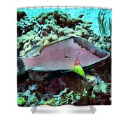 A Hogfish Swimming Above A Coral Reef Shower Curtain