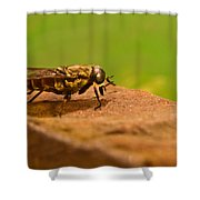 A Horse Fly Posing 1 Shower Curtain