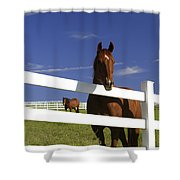 A Horse Peers Over A Fence Shower Curtain