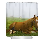A Horse Sitting On The Grass In A Shower Curtain