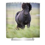 A Horse With Its Mane Blowing In The Shower Curtain