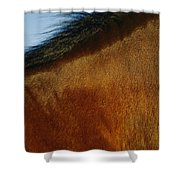 A Horses Neck And Mane, Seen So Close Shower Curtain