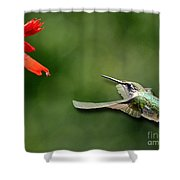 A Hummingbird With Dimension Shower Curtain
