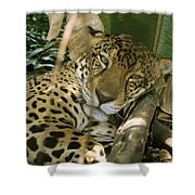 A Jaguar Rests On The Jungle Floor Shower Curtain