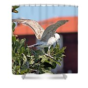 A Juvenile Herring Gull Shower Curtain