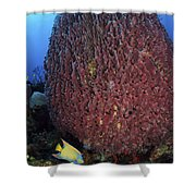 A Large Barrel Sponge With Queen Shower Curtain