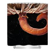 A Large Feather Duster Worm Shower Curtain