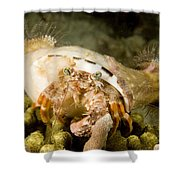 A Large Hermit Crab With Sea Anemones Shower Curtain