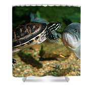 A Large Mouthed Bass And A Chicken Turtle In Aquarium In Cape Co Shower Curtain