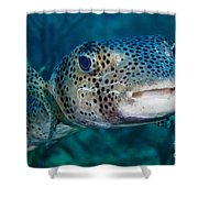 A Large Spotted Pufferfish Shower Curtain
