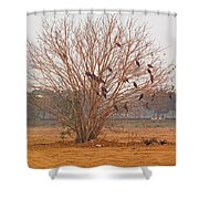 A Leafless Tree That Is Home To A Large Number Of Big Birds In The Middle Of A Ground Shower Curtain