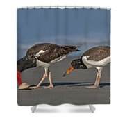 A Lesson In Fine Dinning Shower Curtain by Susan Candelario