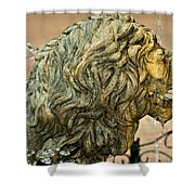 A Lion In Summer Shower Curtain