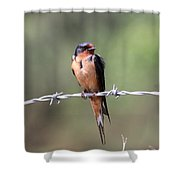 A Little Ruffled Shower Curtain by Travis Truelove