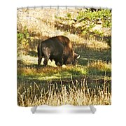 A Lone Bison In Yellowstone 9467 Shower Curtain