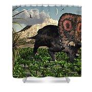 A Lone Torosaurus Dinosaur Feeding Shower Curtain