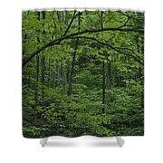 A Lush Green Eastern Woodland View.  An Shower Curtain