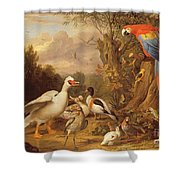 A Macaw - Ducks - Parrots And Other Birds In A Landscape Shower Curtain