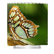 A Malachite Butterfly Shower Curtain