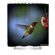 A Male Ruby-throated Hummingbird Shower Curtain