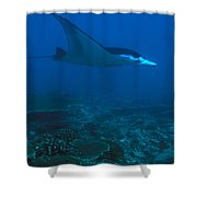 A Manta Ray Swims Through The South Shower Curtain